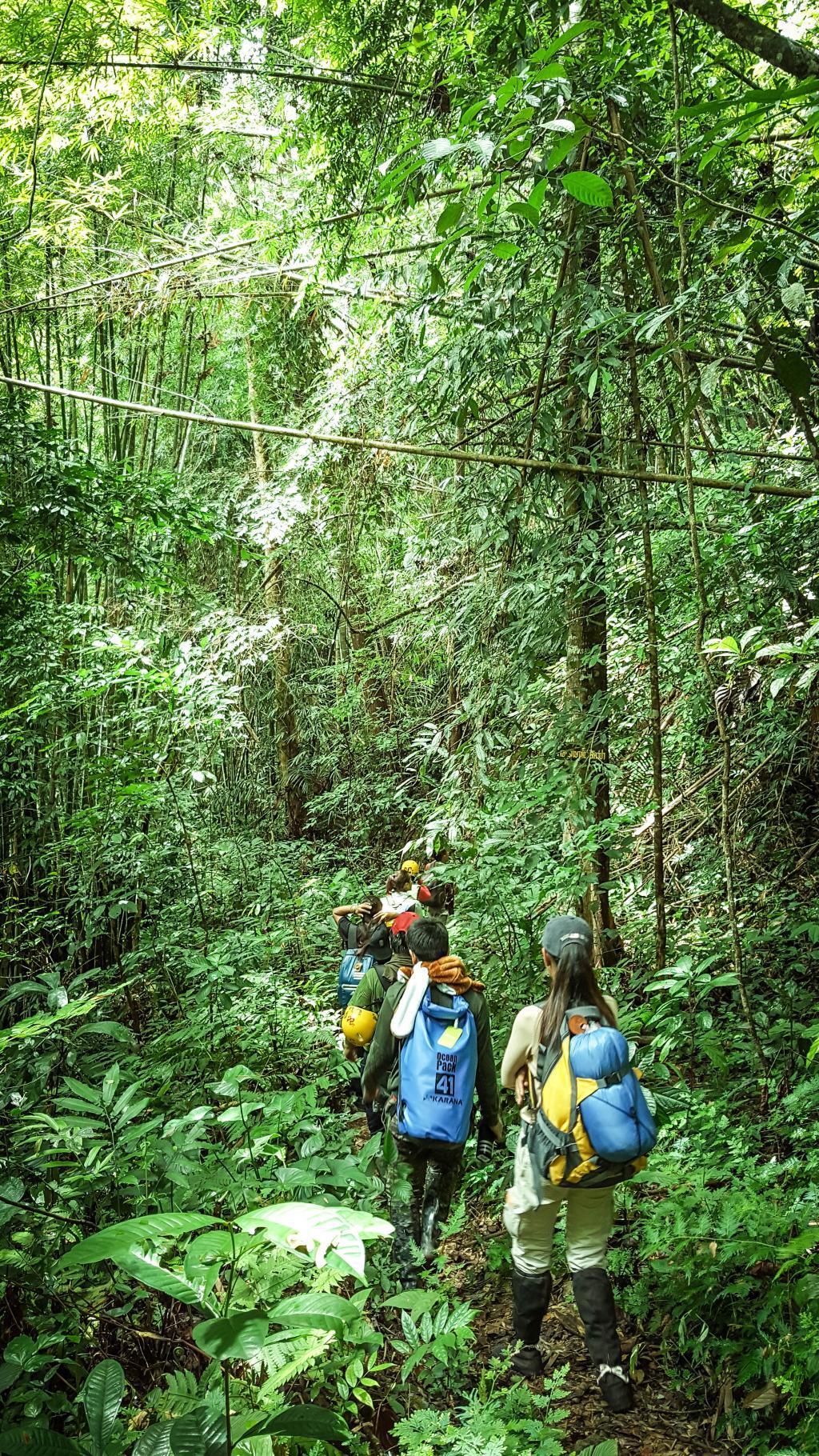 เส้นทางเดินเข้าป่าพะโต๊ะ